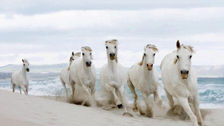 horses, running, sand