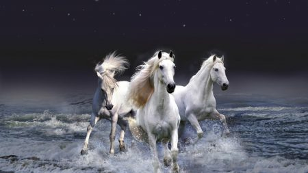 horses, running, sky