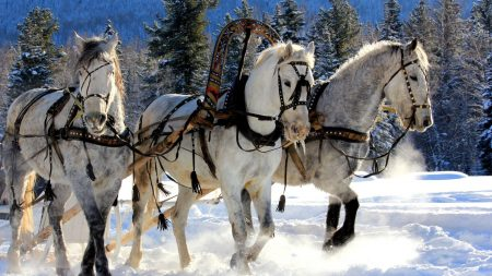horses, three, team