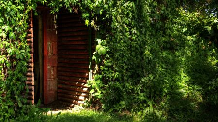 house, door, vegetation