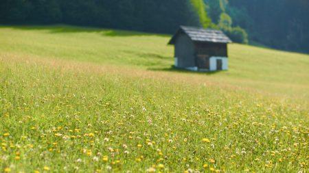 house, flowers, field