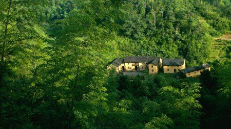 house, greens, wood