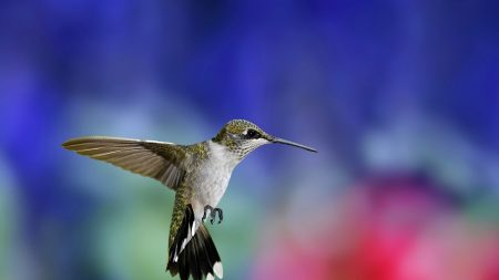 hummingbird, bird, flying