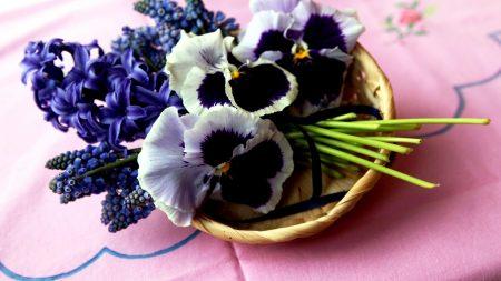 hyacinth, muscari, pansies