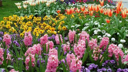 hyacinths, tulips, pansies