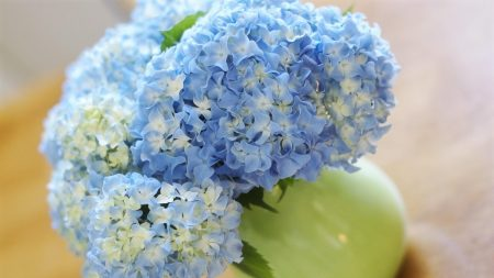 hydrangea, bouquet, vase