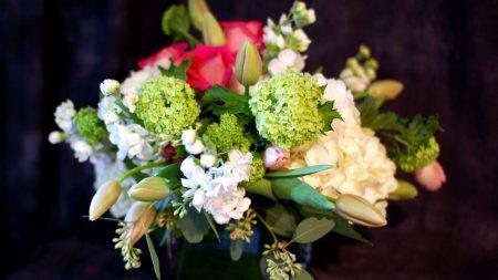 hydrangea, tulips, buds