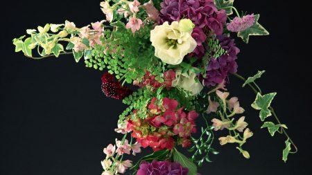hydrangeas, flowers, flower