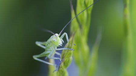 insect, antennae, grass
