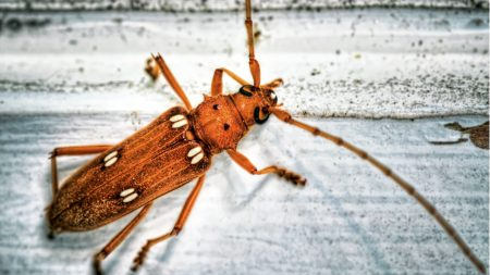 insect, antennae, surface