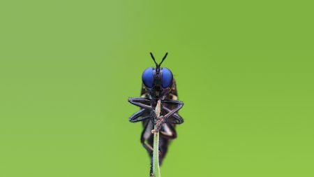 insect, big eyes, blue