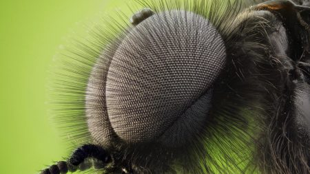 insect, eyes, fur