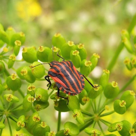 insect, grass, color
