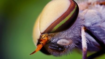 insect, head, eyes