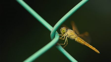 insect, net, metal