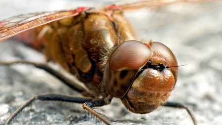 insect, size, eyes