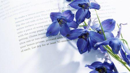 iris, flower, book