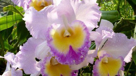 irises, flowers, flowerbed