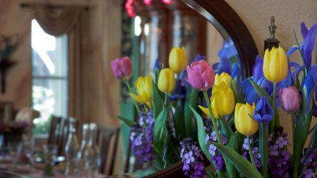 irises, tulips, mattoila