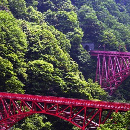 japan, bridge, trees