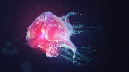 jellyfish, underwater, light