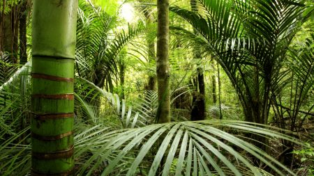 jungle, bamboo, greens