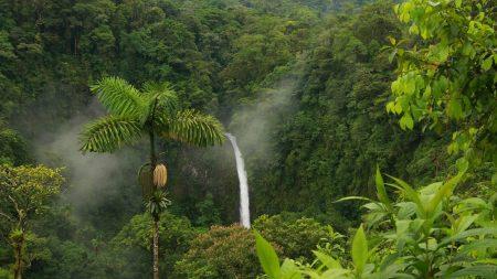 jungle, falls, stones