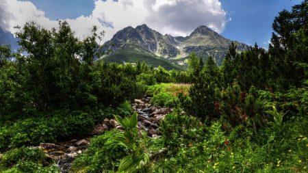 jungle, stones, vegetation