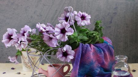 kalibrahoa, flowers, watering can