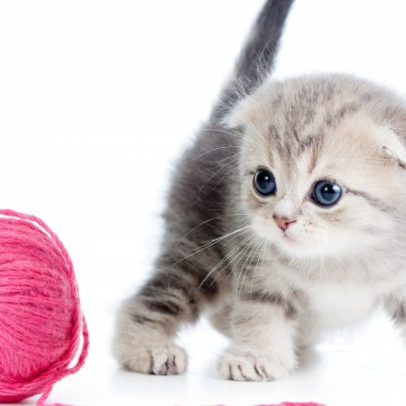 kitten, ball, thread