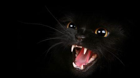 kitten, black, eyes