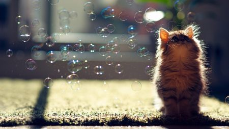 kitten, bubbles, fluffy