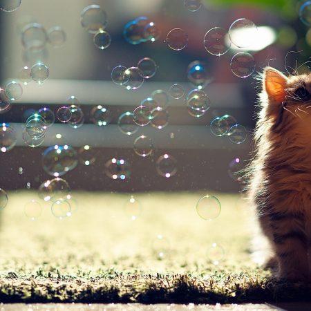 kitten, bubbles, fluffy