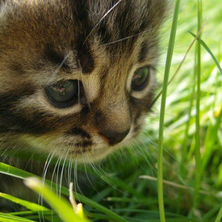 kitten, cat, grass