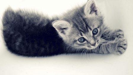 kitten, cat, paw