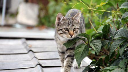 kitten, cat, tree