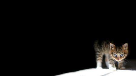 kitten, dark, lying