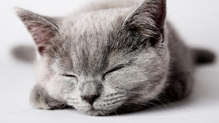 kitten, dream, muzzle