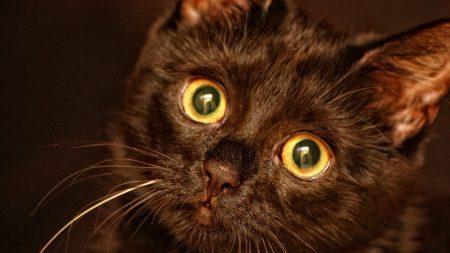 kitten, face, eyes