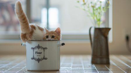 kitten, flowers, pot