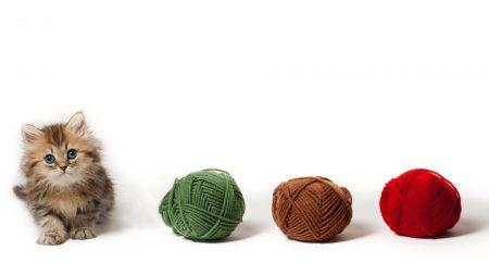 kitten, fluffy, ball