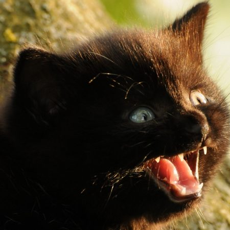 kitten, fluffy, face