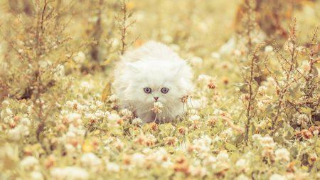 kitten, fluffy, grass