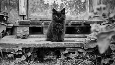 kitten, fluffy, sitting