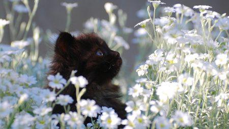 kitten, grass, flowers