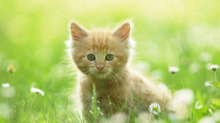 kitten, grass, fluffy