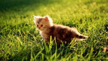kitten, grass, sit