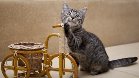 kitten, invention, bicycle