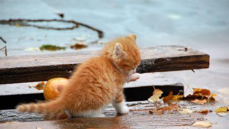 kitten, leaves, autumn