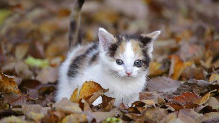 kitten, leaves, fall